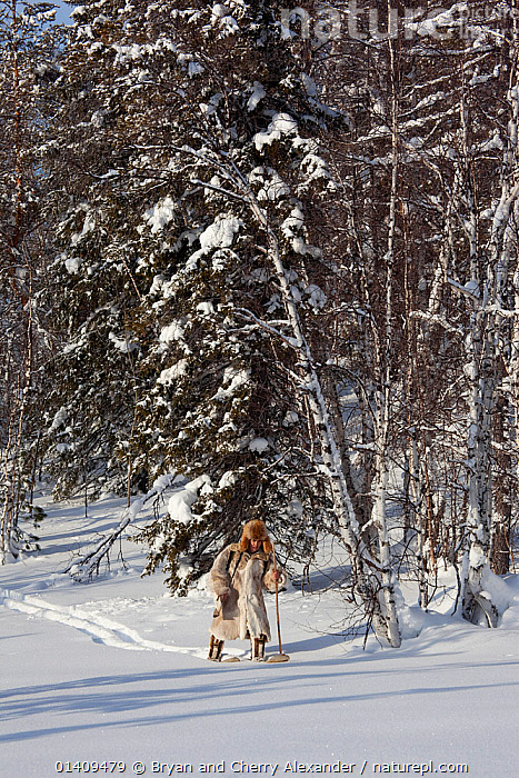 Kosta, a Selkup man, out hunting in the forest on skiis, Krasnoselkup, Yamal, Western Siberia, Russia 2012, ARCTIC,ASIA,BOREAL,CIS,CLOTHING,CULTURES,FORESTS,HUNTING,INDIGENOUS,MALES,MAN,NATIVE,PEOPLE,RUSSIA,SELKUP,SIBERIA,SKIING,SNOW,TAIGA,TRADITIONAL,TREES,TRIBAL,TRIBES,VERTICAL,WALKING,WESTERN SIBERIA,WINTER,PLANTS, Bryan and Cherry Alexander