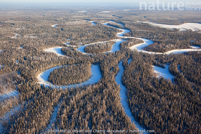 Aerial view of boreal forest / taiga in winter in the Taz River Basin, Krasnoselkup, Yamal, Western Siberia, Russia 2012, AERIALS,ARCTIC,ASIA,BOREAL,CIS,CONIFEROUS,FORESTS,FROZEN,HABITAT,ICE,LANDSCAPES,MEANDERS,RIVERS,RUSSIA,SIBERIA,TAIGA,TREES,WESTERN SIBERIA,WINTER,YAMAL,PLANTS, Bryan and Cherry Alexander