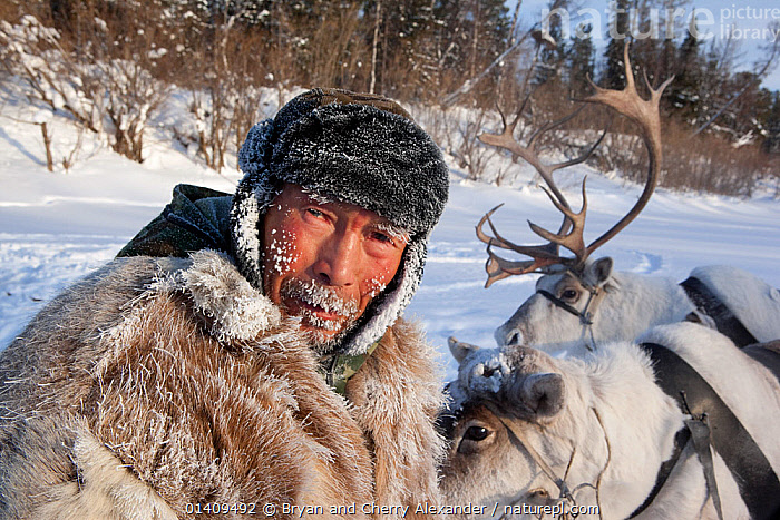 Gennadiy Kubolev, a Selkup hunter, with his draft reindeer on the frozen Shirta River, Krasnoselkup, Yamal, Western Siberia, Russia 2012, ARCTIC,ARTIODACTYLA,ASIA,CIS,CLOTHING,CULTURES,DOMESTIC,FUR,HUNTING,ICE,INDIGENOUS,LIVESTOCK,MALES,MAMMALS,MAN,NATIVE,PEOPLE,PORTRAITS,REINDEER,RUSSIA,SELKUP,SIBERIA,TRADITIONAL,TRANSPORT,TRAVELLING,TRIBAL,TRIBES,WESTERN SIBERIA,WINTER,WORKING ANIMALS, Bryan and Cherry Alexander