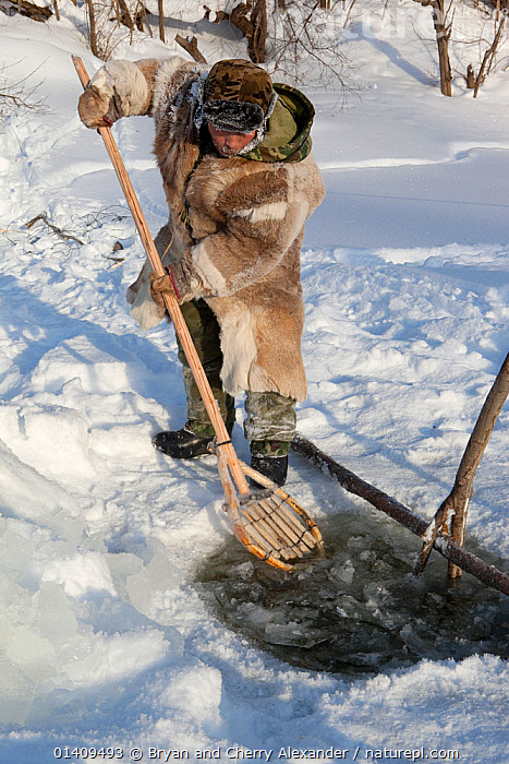 Gennadiy Kubolev, using a traditional Selkup shovel to remove pieces of ice from the water while checking a fishing net in a frozen river,  Krasnoselkup, Yamal, Western Siberia, Russia 2012, ARCTIC,ASIA,CIS,CLEARING,CULTURES,FISH,FISHING,FROZEN,HUNTING,ICE,INDIGENOUS,MALES,NATIVE,NETS,PEOPLE,RUSSIA,SELKUP,SIBERIA,TOOLS,TRADITIONAL,TRIBAL,TRIBES,VERTICAL,WESTERN SIBERIA,WINTER, Bryan and Cherry Alexander