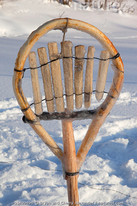 A traditional Selkup shovel for removing pieces of ice from the water while checking fishing nets in a frozen river, Krasnoselkup, Yamal, Western Siberia, Russia 2012, ARCTIC,ASIA,CIS,CULTURES,DETAIL,FISHING,ICE,IMPLEMENT,INDIGENOUS,MANMADE,NATIVE,PEOPLE,RUSSIA,SELKUP,SHOVEL,SIBERIA,TOOLS,TRADITIONAL,TRIBAL,TRIBES,VERTICAL,WESTERN SIBERIA,WOOD,WOODEN, Bryan and Cherry Alexander