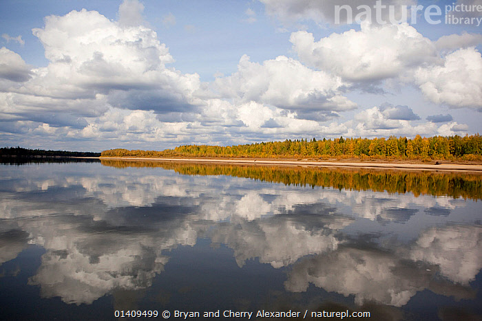 Boreal Forest trees in autumn colour reflected in the River Taz, Krasnoselkup, Yamal, Western Siberia, Russia, ARCTIC,ASIA,AUTUMN,BOREAL,CALM,CIS,CLOUDS,FALL,FORESTS,FRESHWATER,LANDSCAPES,PEACEFUL,REFLECTIONS,RIVERS,RUSSIA,SIBERIA,SKIES,TREES,WATER,WESTERN SIBERIA,Weather,PLANTS, Bryan and Cherry Alexander