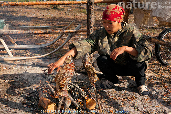 Rita Markova, a young Selkup woman, cooking fish (golden eye) over an open fire at a Selkup summer camp in the forest, Krasnoselkup, Yamal, Western Siberia, Russia, ARCTIC,ASIA,CAMPFIRES,CAMPING,CIS,COOKING,CULTURES,FEMALES,FIRE,FIRES,FISH,FOOD,INDIGENOUS,NATIVE,PEOPLE,ROASTING,RUSSIA,SELKUP,SIBERIA,TRADITIONAL,TRIBAL,TRIBES,WESTERN SIBERIA,WOMAN,YOUNG, Bryan and Cherry Alexander