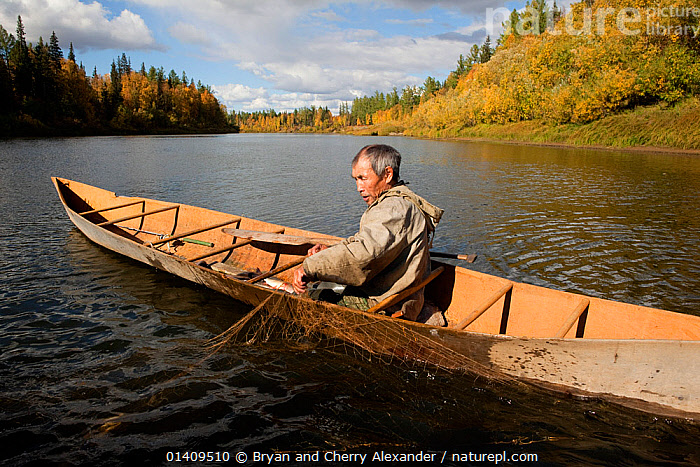 On an autumn day, Gennadiy Kubolev, a Selkup man, checks a fishing net from his 'Anty' (traditional dugout boat) on the River Shirta,  Krasnoselkup, Yamal, Western Siberia, Russia, ARCTIC,ASIA,AUTUMN,BOATS,CANOE,CIS,CULTURES,DUGOUT,DUGOUTS,FISHING,FOOD,FRESHWATER,INDIGENOUS,MALES,MAN,NATIVE,PEOPLE,RIVERS,RUSSIA,SELKUP,SIBERIA,TRADITIONAL,TRIBAL,TRIBES,WATER,WESTERN SIBERIA,WOODEN ,Tribes,, Bryan and Cherry Alexander