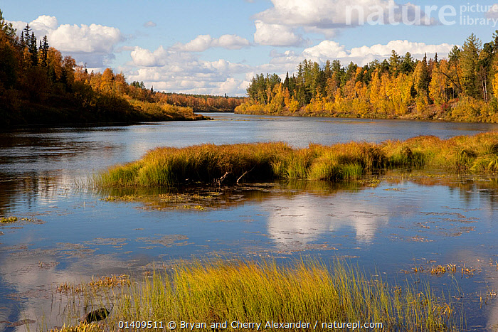 Autumn colour on the banks of the River Shirta as it cuts through boreal forest, Krasnoselkup, Yamal, Western Siberia, Russia, ARCTIC,ASIA,AUTUMN,BIRCH,BOREAL,CALM,CIS,FORESTS,FRESHWATER,HABITAT,LANDSCAPES,PEACEFUL,RIVERS,RUSSIA,SIBERIA,TAIGA,TREES,WATER,WESTERN SIBERIA,WOODLANDS,PLANTS, Bryan and Cherry Alexander