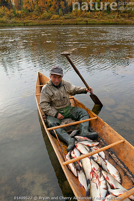 On an autumn day, Gennadiy Kubolev, a Selkup man, returns from fishing in his 'Anty' (traditional dugout boat) on the River Shirta, Krasnoselkup, Yamal, Western Siberia, Russia, ARCTIC,ASIA,AUTUMN,BOATS,CANOE,CIS,CULTURES,DUGOUT,DUGOUTS,FISH,FISHING,FOOD,FRESHWATER,INDIGENOUS,MALES,MAN,NATIVE,PEOPLE,PROVISIONS,RIVERS,RUSSIA,SELKUP,SIBERIA,TRADITIONAL,TRANSPORT,TRIBAL,TRIBES,VERTICAL,WATER,WESTERN SIBERIA,WOODEN ,Tribes,, Bryan and Cherry Alexander