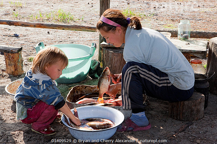 Lena Kuboleva, a young Selkup woman, cleans fish while her niece Anastasia watches, at a summer camp in the forest, Krasnoselkup, Yamal, Western Siberia, Russia, ARCTIC,ASIA,CHILDREN,CIS,CLEANING,CULTURES,FEMALES,FISH,FOOD,INDIGENOUS,JUVENILE,LEARNING,LIFESTYLE,NATIVE,PEOPLE,PREPARATION,RUSSIA,SEASONAL,SELKUP,SIBERIA,TRADITIONAL,TRIBAL,TRIBES,WESTERN SIBERIA,WOMAN,YOUNG ,Tribes,, Bryan and Cherry Alexander
