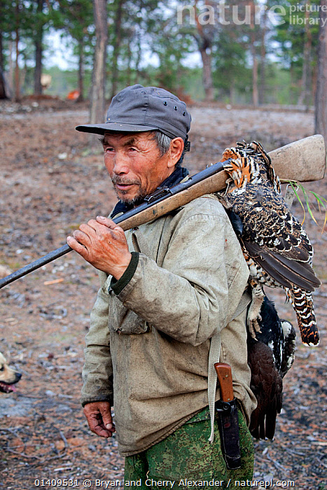Gennadiy Kubolev, a Selkup man, returns from hunting in the forest carrying his catch of two Capercailles, Krasnoselkup, Yamal, Western Siberia, Russia, ARCTIC,ASIA,BIRDS,BOREAL,CAPERCAILLE,CARCASSES,CIS,CULTURES,DEAD,FORESTS,GUNS,HUNTING,INDIGENOUS,MALES,MAN,NATIVE,PEOPLE,RIFLE,RUSSIA,SELKUP,SHOTGUN,SIBERIA,TRADITIONAL,TRIBAL,TRIBES,VERTICAL,WESTERN SIBERIA, Bryan and Cherry Alexander