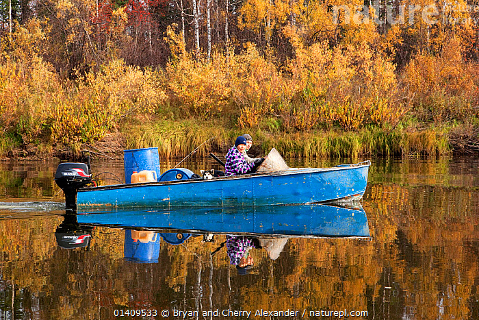 Selkup hunter, Igor Kubolev, and his girlfriend Rita travelling by boat on the River Shirta in the autumn, Krasnoselkup, Yamal, Western Siberia, Russia, ARCTIC,ASIA,AUTUMN,BOATS,BOREAL,CIS,CULTURES,FORESTS,INDIGENOUS,NATIVE,OUTBOARDS,PEOPLE,PROFILE,REFLECTIONS,RIVERS,RUSSIA,SELKUP,SIBERIA,TAIGA,TRADITIONAL,TRANSPORT,TRAVELLING,TRIBAL,TRIBES,WATER,WESTERN SIBERIA,BOAT-PARTS ,Tribes,, Bryan and Cherry Alexander