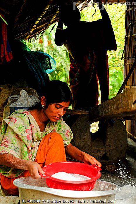 A woman sifting rice, the Sundarbans National Park, UNESCO World Heritage Site. June 2012., ASIA,BANGLADESH,FOOD,NP,PEOPLE,RESERVE,VERTICAL,WOMAN,WOMEN,WORKING,National Park, Enrique Lopez-Tapia