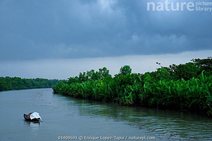 Boat in the Sundarbans National Park, the largest mangrove swamp in the world. Bangladesh, UNESCO World Heritage Site. June 2012., ASIA,BANGLADESH,BOATS,FISHING BOATS,LANDSCAPES,NP,RESERVE,RIVERS,SWAMPS,TRADITIONAL,WATER,WOODEN,INDIAN-SUBCONTINENT,National Park,Wetlands, Enrique Lopez-Tapia