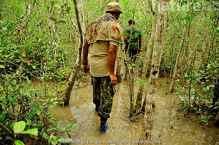 Tourist guides in mangroves  to observe wildlife of the area, Sundarbans National Park, the largest mangrove swamp in the world. UNESCO World Heritage Site. June 2012., ASIA,BANGLADESH,ECOTOURISM,MAN,MEN,NP,PEOPLE,RESERVE,TOURISM,National Park, Enrique Lopez-Tapia