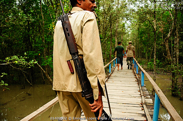 Armed guard in the Sundarbans national park. Tourist groups are accompanied by an armed guard as this area has the largest population of tigers in Asia, and also the highest number of tiger attacks on humans, The Sundarbans National Park, Bangladesh. UNESCO World Heritage Site. June 2012., ASIA,ATTACKING,BANGLADESH,BRIDGES,DANGEROUS,DEFENSE,GUARDING,GUNS,MAN,MEN,NP,PEOPLE,RESERVE,TIGERS,WEAPONS,National Park, Enrique Lopez-Tapia