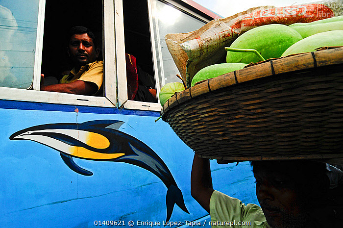 Man carrying melons watched by people on a bus, Dhaka, Bangladesh June 2012., ASIA,BANGLADESH,BUSES,CARRYING,CITIES,FRUIT,MAN,MELONS,PEOPLE,TRANSPORT,URBAN,Plants, Enrique Lopez-Tapia