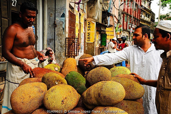 Kathal or jackfruits for sale in  market, Dhaka, Bangladesh, June 2012., ASIA,BANGLADESH,CITIES,FRUIT,MARKETS,PEOPLE,SELLING,TRADE,URBAN,Plants, Enrique Lopez-Tapia