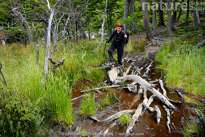 Hiker  on a boggy trail in Valle del Frances,  Torres del Paine National Park, Patagonia, Chile. Model released., BOGS,EUROPE,HIKING,PEOPLE,SOUTH AMERICA,TREKKING,WALKING,WATER,WETLANDS,WOMAN, Oriol Alamany