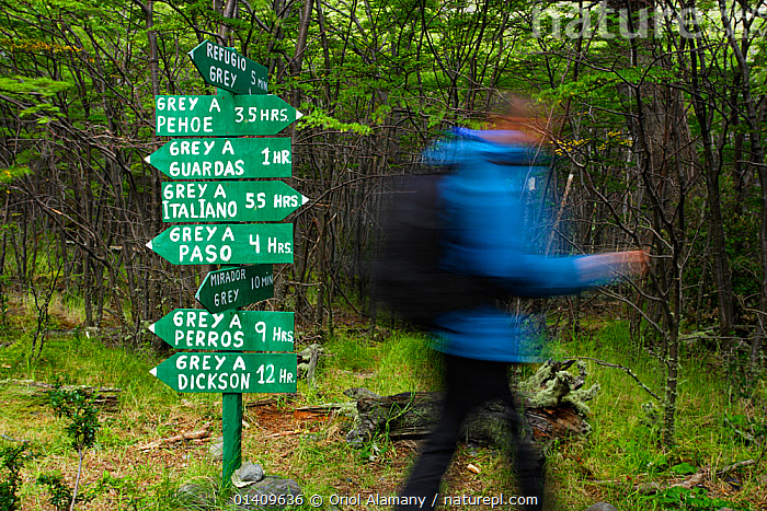 Person walking in front of signpost for walkers, near Refugio Grey hut, Torres del Paine National Park, Patagonia, Chile. Model released., HIKING,NP,PEOPLE,RESERVE,SIGNS,SOUTH AMERICA,TREKKING,WALKING,National Park, Oriol Alamany