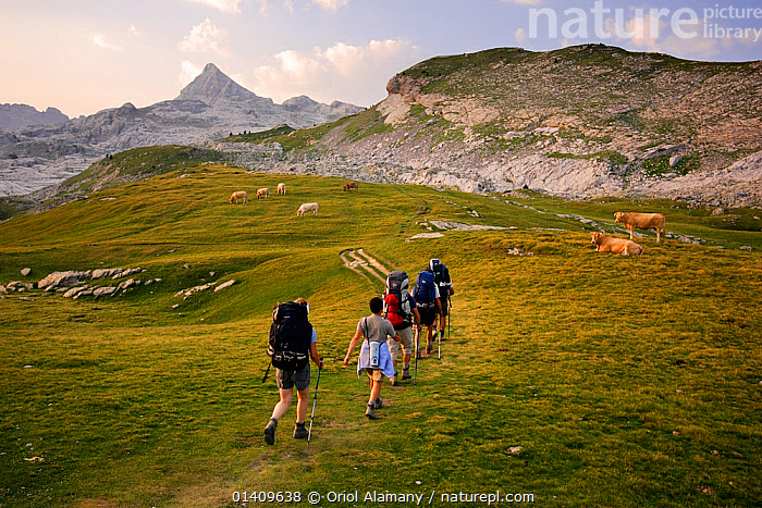 People Hiking at sunrise on the trail to Anie peak (2507 m) in Belagua valley, Pyrenees, Navarra, Spain, EUROPE,GROUPS,HIKING,LANDSCAPES,MOUNTAINEERING,MOUNTAINS,PEOPLE,SPAIN,TREKKING,WALKING,SPORTS, Oriol Alamany