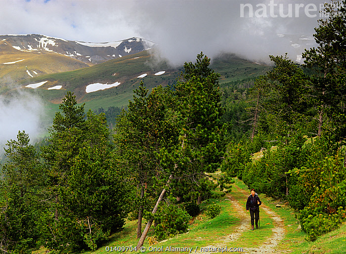 Hiker walking the GR11 long distance footpath near Queralbs in Ribes valley, Pyrenees, Ripollas, Catalonia, Spain (Model released), EUROPE,FORESTS,HIKING,LANDSCAPES,MOUNTAINS,PATHS,PEOPLE,SPAIN,TRAILS,TREES,TREKKING,WALKING,PLANTS, Oriol Alamany
