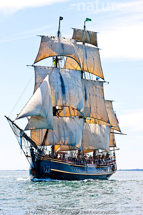 Tall ship 'Bounty', which sank off the coast of North Carolina during Hurricane Sandy in October 2012, seen here near to Rhode Island, USA, July 2012., BOATS,BOWSPRITS,COASTS,NORTH AMERICA,REPLICAS,SAILING BOATS,SAILS,SQUARE RIGGER,TALL SHIPS,USA,VERTICAL,YACHTS,YARDARMS,BOAT-PARTS,SAILING-BOATS, Onne van der Wal