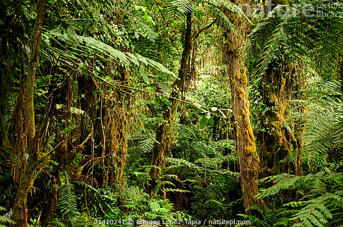 Tropical forest at lower level slopes of Mount Kilimanjaro volcano, Tanzania, AFRICA,catalogue5,dense,EAST AFRICA,FORESTS,full frame,GROWTH,HABITAT,LANDSCAPES,LEAVES,lush,Mount Kilimanjaro,nature,Nobody,outdoors,overgrown,PLANTS,rainforest,tanzania,TREES,TROPICAL,TROPICAL RAINFOREST,tropics,vegetation,Concepts, Enrique Lopez-Tapia