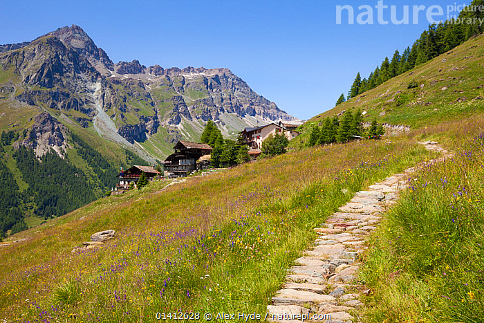 Path leading towards Rifugio Ferraro, Resy, Aosta Valley, Monte Rosa Massif, Pennine Alps, Italy. July 2012, ALPINE,ALPS,BUILDINGS,CHALETS,EUROPE,HABITAT,ITALY,LANDSCAPES,MEADOWLAND,MEADOWS,MOUNTAINS,PATHS,PENNINES,REFUGE,SUMMER,TRAILS,VALLEYS,Grassland, Alex Hyde