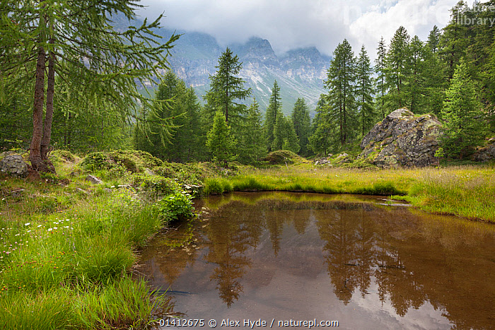 Mountain lake in the Aosta Valley, Monte Rosa Massif, Pennine Alps, Italy. July 2012, ALPINE,ALPS,EUROPE,FORESTS,FRESHWATER,ITALY,LAKES,LANDSCAPES,PONDS,SUMMER,WATER,WOODLANDS, Alex Hyde
