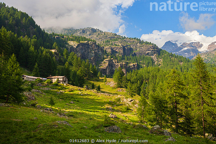 Abandoned farm buildings in mountain landscape, Aosta Valley, Monte Rosa Massif, Pennine Alps, Italy. July 2012, ALPINE,ALPS,BUILDINGS,DESERTED,EUROPE,FARMS,FORESTS,HABITAT,ITALY,LANDSCAPES,MOUNTAINS,OLD,SUMMER,WOODLANDS, Alex Hyde
