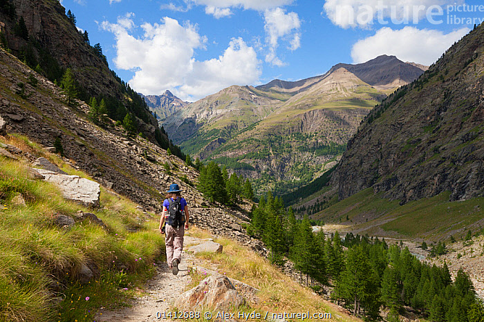 Hiker in Vallone di Valelle, Gran Paradiso National Park, Aosta Valley, Pennine Alps, Italy. July 2012, ALPINE,ALPS,EUROPE,FEMALES,HIGHLANDS,HIKING,HOLIDAYS,ITALY,LANDSCAPES,LEISURE,MOUNTAINS,NATIONAL PARK,NP,OUTDOORS,PATHS,PEOPLE,RESERVE,SUMMER,TRAILS,TRAVEL,VALLEYS,WALKING,Concepts, Alex Hyde