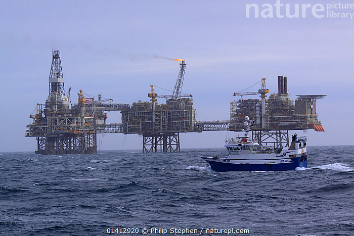 Fishing vessel 'Harvester' with the Buzzard Production Platform beyond, North Sea, EUrope, February 2012., BOATS,EUROPE,FISHING BOATS,FUEL,INDUSTRY,NORTH SEA,OIL RIG,OIL RIGS,PROFILE,WORKING BOATS, Philip Stephen