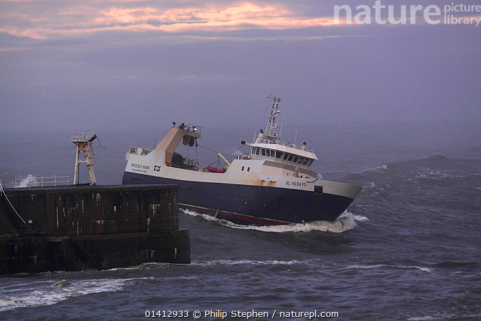 French sterntrawler 'Bressay Bank' approaching Peterhead Harbour, Scotland, December 2012., BOATS,CHOPPY,COASTS,DANGEROUS,EUROPE,FISHING BOATS,HARBOURS,HEAVY SEAS,NORTH SEA,UK,WALL,WALLS,WORKING BOATS,United Kingdom, Philip Stephen