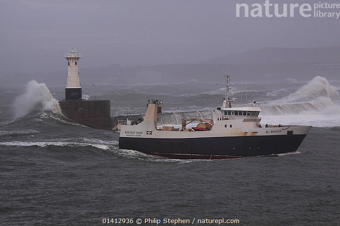 French sterntrawler 'Bressay Bank' entering Peterhead Harbour, Scotland, December 2012., BOATS,CHOPPY,COASTS,EUROPE,FISHING BOATS,HARBOURS,HEAVY SEAS,NORTH SEA,PROFILE,UK,WALL,WALLS,WORKING BOATS,United Kingdom, Philip Stephen