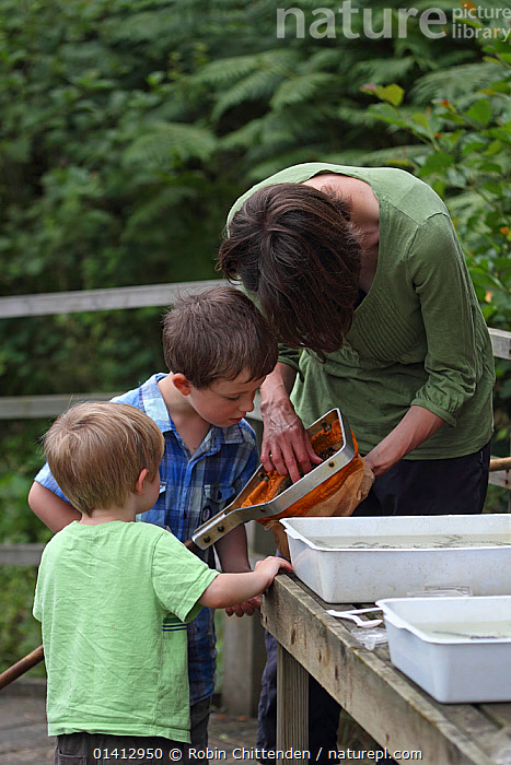 Children examining their find after pond dipping. RSPB Minsmere, Suffolk, UK, August 2012., CHILDREN,EDUCATION,EUROPE,LEISURE,NATURE,OUTDOORS,PEOPLE,POND DIPPING,RESERVE,THREE,UK,VERTICAL,ENGLAND,United Kingdom, Robin Chittenden