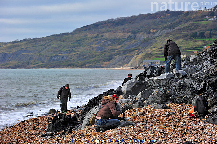 Palaeontologists and tourists looking for fossils on beach after landslide at the Black Ven between Lyme Regis and Charmouth along the Jurassic Coast, Dorset, UK, November 2012, BEACH COMBING,BEACHES,CLIFFS,COASTAL,COASTS,ENGLAND,EROSION,EUROPE,FOSSILS,GEOLOGY,LANDSLIDE,MARINE,PEOPLE,RESEARCH,ROCKS,SEA,SEARCHING,UK,UNESCO,WORLD HERITAGE,United Kingdom,,Dorset and East Devon Coast, UNESCO World Heritage Site,, Philippe Clement