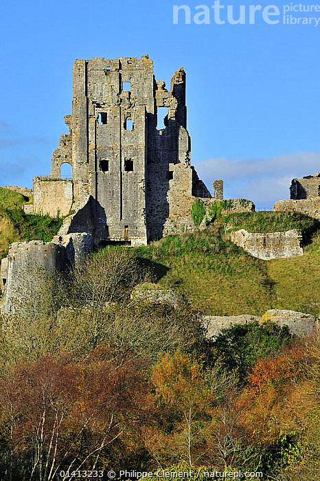 Ruins of the medieval Corfe Castle in autumn on the Isle of Purbeck along the Jurassic Coast in Dorset, UK, November 2012, BUILDINGS,CASTLES,ENGLAND,EUROPE,HISTORIC,LANDMARK,LANDSCAPES,OLD,RUIN,RUINS,UK,UNESCO,VERTICAL,WORLD HERITAGE,United Kingdom, Philippe Clement