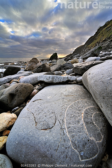 Large ammonite fossil embedded in rock on beach at Pinhay Bay near Lyme Regis along the World Heritage Jurassic Coast, Dorset, UK, November 2012, AMMONITES,BEACHES,CLOUDS,COASTS,DORSET,ENGLAND,EUROPE,FOSSILS,GEOLOGY,INVERTEBRATES,MOLLUSCS,OLD,ROCKS,SEASHELLS,SHELLS,SPIRAL,UK,UNESCO,VERTICAL,WORLD HERITAGE,Weather,United Kingdom,,Dorset and East Devon Coast, UNESCO World Heritage Site,, Philippe Clement