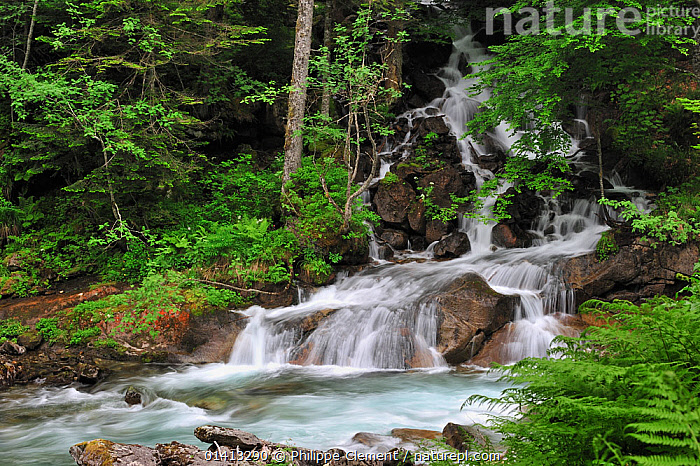 Waterfall near the Pont d'Espagne in the Hautes-Pyrenees near Cauterets, Pyrenees, France, June 2012, EUROPE,FRANCE,FRESHWATER,HIGHLANDS,LANDSCAPES,MOUNTAINS,PYRENEES,RIVERS,WATERFALLS, Philippe Clement