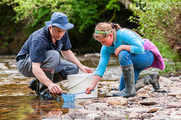 School child releases salmon fry in the River Haddeo, with Westcountry Rivers Trust (WRT) warden. Bury, Exmoor National Park, Somerset, UK. May 2012. Editorial use only  ,  2020VISION,CHILDREN,CONSERVATION,EDUCATION,ENGLAND,EUROPE,FIELDWORK,FISH,FRESHWATER,FRY,GROUPS,NP,PEOPLE,RESEARCH,RESERVE,RIVER BANK,RIVERS,SALMON,SAMPLES,SAMPLING,SCHOOLS,SCIENCE,SOMERSET,STREAMS,UK,WATER,National Park,United Kingdom,2020cc  ,  Ross Hoddinott / 2020VISION