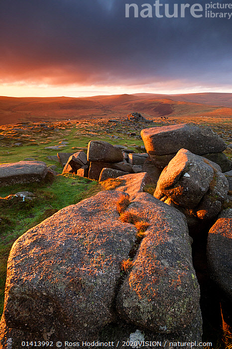 Moorland view at Belstone with granite outcrops in the foreground, near Okehampton, Dartmoor National Park, Devon, England, UK, October 2011.  ,  2020VISION,ENGLAND,EUROPE,GEOLOGY,LANDSCAPES,MOORLAND,NP,RESERVE,ROCK FORMATIONS,ROCKS,SUNRISE,SUNSET,UK,UPLANDS,VERTICAL,National Park,United Kingdom,2020cc  ,  Ross Hoddinott / 2020VISION