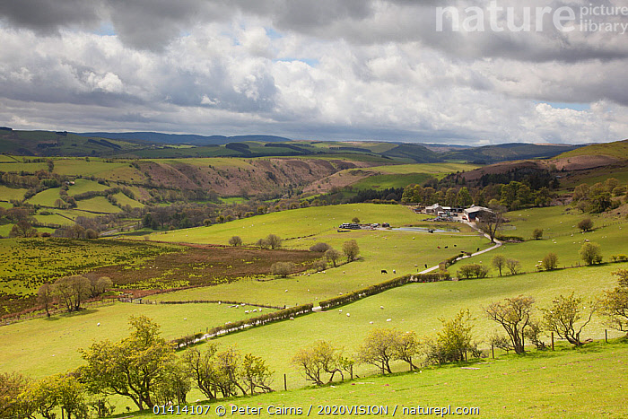 View of upland agricultural landscape in the Cambrian Mountains, part of the Pumlumon Living Landscape project, Ceredigion, Wales, May 2012.  ,  2020VISION,AGRICULTURE,EUROPE,FARMLAND,FIELD,FIELDS,LANDSCAPES,UK,UPLANDS,WALES,United Kingdom,2020cc  ,  Peter Cairns / 2020VISION