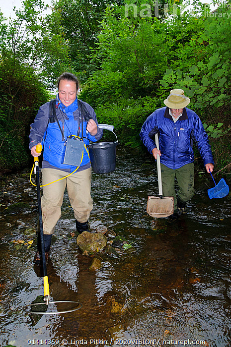 Fisheries assistant Stephanie Kershaw and volunteer John Dumont at the Eden Rivers Trust electrofishing for juvenile Atlantic salmon (Salmo salar) and Brown trout (Salmo trutta) as part of a capture and release conservation program, Cumbria, England, UK, September 2012. Model released.  ,  2020VISION,CAUCASIAN,CONSERVATION,ENGLAND,EUROPE,FISH,FISHERIES,FRESHWATER,MAN,MARINE,OSTEICHTHYES,OUTDOORS,PEOPLE,RIVERS,RIVER TROUT,SALMON,STREAMS,TROUT,TWO,UK,VERTEBRATES,VERTICAL,WOMAN,United Kingdom,2020cc  ,  Linda Pitkin / 2020VISION