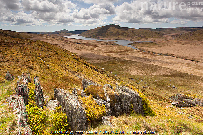 View over upland moorland landscape, part of Pumlumon Living Landscape project, Cambrian Mountains, Ceredigion, Wales, May 2012.  ,  2020VISION,EUROPE,LANDSCAPES,MOORLAND,PLYNLIMON,ROCKS,UK,UPLANDS,WALES,United Kingdom,2020cc  ,  Peter Cairns / 2020VISION