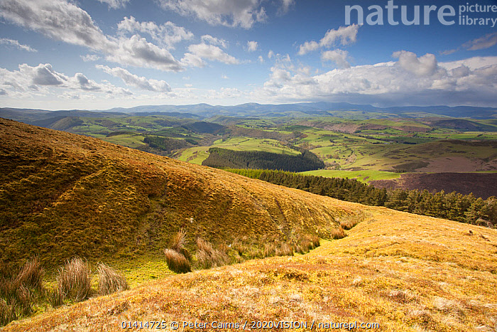 View of upland agricultural landscape in the Cambrian Mountains, part of the Pumlumon Living Landscape project, Ceredigion, Wales, May 2012.  ,  2020VISION,AGRICULTURE,EUROPE,LANDSCAPES,MOORLAND,PLYNLIMON,UK,UPLANDS,WALES,United Kingdom,2020cc  ,  Peter Cairns / 2020VISION