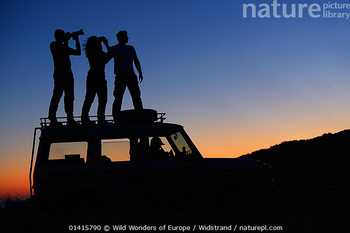 Silhouetted people watching wildlife  at dusk from roof of vehicle of Safari tour operator Rudi Katic at Velebit Photo Safaris. Paklenica National Park, Velebit Nature Park, Rewilding Europe area, Velebit mountains, Croatia June 2012  ,  CROATIA,DUSK,EASTERN EUROPE,EUROPE,EVENING,GROUPS,HIGHLANDS,HOLIDAYS,MOUNTAINS,NATIONAL PARK,NP,OUTLINE,PEOPLE,RESERVE,REWILDING,SILHOUETTES,STAFFAN WIDSTRAND,SUNSET,THREE,TOURISM,TOURISTS,VEHICLES,VELEBIT,WWE,Concepts  ,  Wild Wonders of Europe / Widstrand