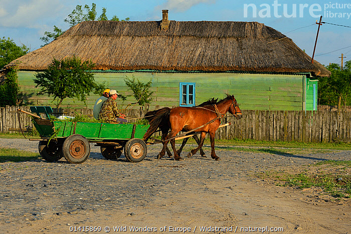 Traditional means of transport, horse and cart, Letea, Danube delta rewilding area, Romania May 2012  ,  CART,DANUBE,DELTA,DOMESTIC,EASTERN EUROPE,EUROPE,HOMES,HORSES,HOUSES,LANDSCAPES,MAMMALS,PEOPLE,REWILDING,RURAL,STAFFAN WIDSTRAND,TRADITIONAL,TRANSPORT,TRAVELLING,WETLANDS,WORKING ANIMALS,WWE  ,  Wild Wonders of Europe / Widstrand