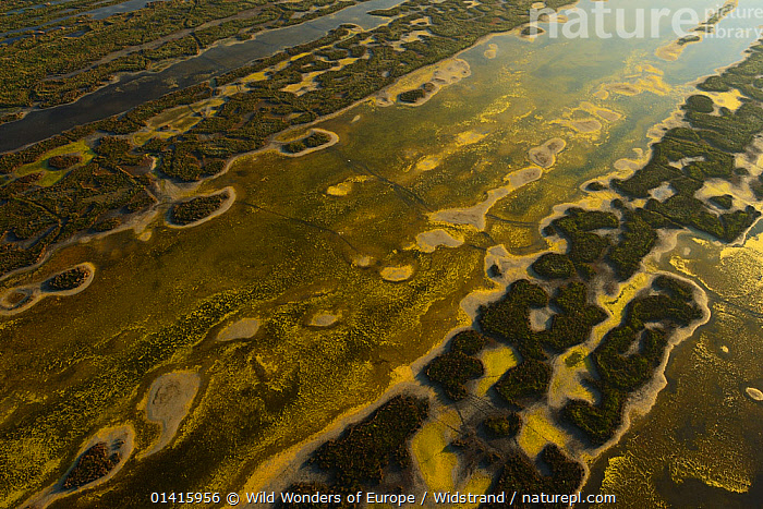 Aerial view over the Danube delta, abstract patterns of water and ground, Danube delta rewilding area, Romania, June 2012  ,  ABSTRACT,AERIALS,ARTY SHOTS,DANUBE,DELTA,EASTERN EUROPE,EUROPE,HABITAT,LANDSCAPES,PATTERNS,REWILDING,STAFFAN WIDSTRAND,WATER,WETLANDS,WWE  ,  Wild Wonders of Europe / Widstrand