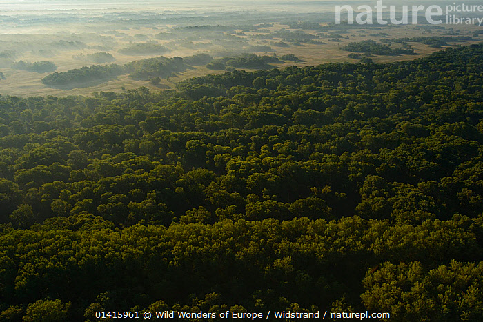 Aerial view over Letea forest at dawn, within the Danube delta rewilding area, Romania, June 2012  ,  AERIALS,CALM,DANUBE,DAWN,DELTA,EASTERN EUROPE,EUROPE,FORESTS,HABITAT,LANDSCAPES,PEACEFUL,PROTECTED,RESERVE,REWILDING,STAFFAN WIDSTRAND,SUNRISE,TREES,WETLANDS,WOODLANDS,WWE,PLANTS  ,  Wild Wonders of Europe / Widstrand