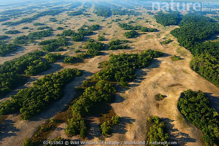 Aerial view over Letea forest, within the Danube delta rewilding area, Romania, June 2012  ,  AERIALS,DANUBE,DELTA,EASTERN EUROPE,EUROPE,FORESTS,HABITAT,LANDSCAPES,PROTECTED,RESERVE,REWILDING,STAFFAN WIDSTRAND,WETLANDS,WOODLANDS,WWE  ,  Wild Wonders of Europe / Widstrand