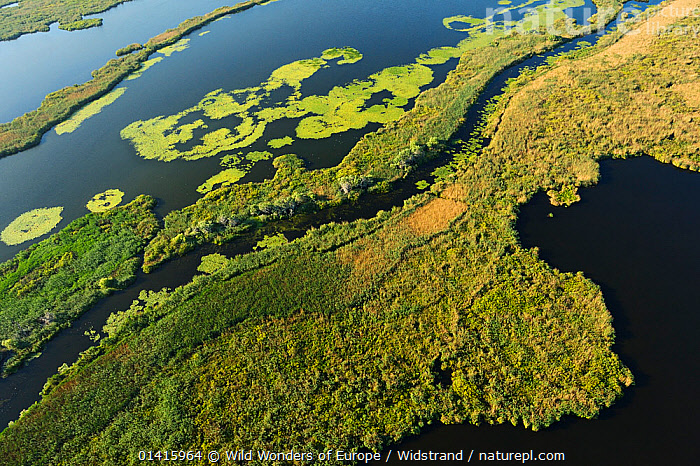 RF- Aerial view over the Danube delta rewilding area, Romania, June 2012. (This image may be licensed either as rights managed or royalty free.)  ,  Danube,Delta,EASTERN-EUROPE,LANDSCAPES,Rewilding,WATER,WWE,AERIALS,EUROPE,HABITAT,Staffan Widstrand,WETLANDS RF16Q4,ROMANIA,,Colour,Green,Nobody,Pattern,Natural Pattern,Shape,Edge,Europe,Eastern Europe,East Europe,Romania,Aerial View,High Angle View,Flowing Water,River,Day,Restoration,Nature,Freshwater,Water,Conservation,Rewilding,Elevated view,Delta,Deltas,Hues,RF,Royalty free,RFCAT1,RF16Q4,  ,  Wild  Wonders of Europe / Widstrand