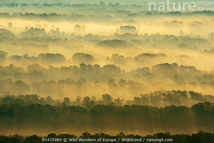 Aerial view over the Letea forest at dawn, Danube delta rewilding area, Romania, June 2012  ,  AERIAL VIEW,AERIALS,ATMOSPHERIC,CALM,DANUBE,DAWN,DELTA,EASTERN EUROPE,EUROPE,FORESTS,HABITAT,LANDSCAPES,PEACEFUL,REWILDING,STAFFAN WIDSTRAND,SUNRISE,TREES,WETLANDS,WOODLANDS,WWE,PLANTS  ,  Wild Wonders of Europe / Widstrand